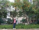 Logan with the orangetrees
