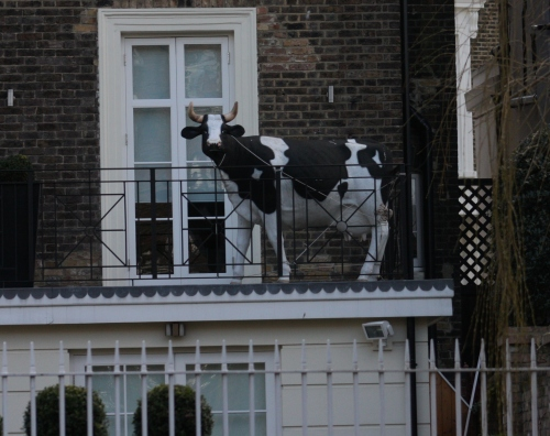Cow on Balcony of Canal House