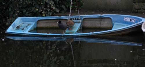 Ducks on a Sinking Boat