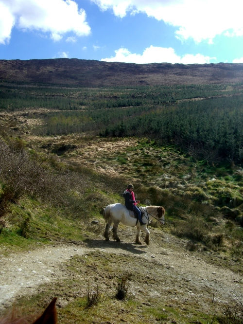 Horseback riding in Country Cork (Bantry)