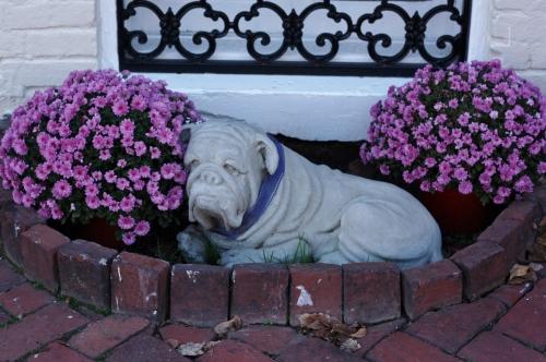 Sweet Bulldog Statue