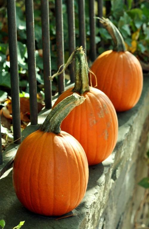 Pumpkins in Georgetown