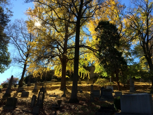 Beautiful Fall foliage and blue skies