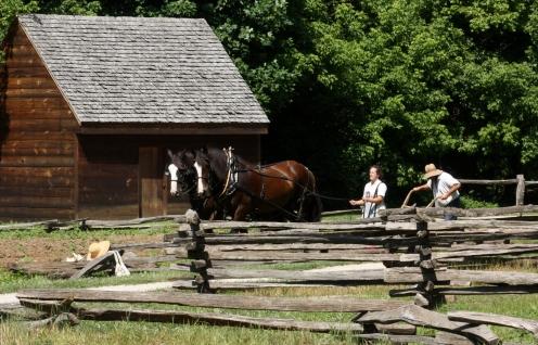 Mount Vernon Draft Horse II