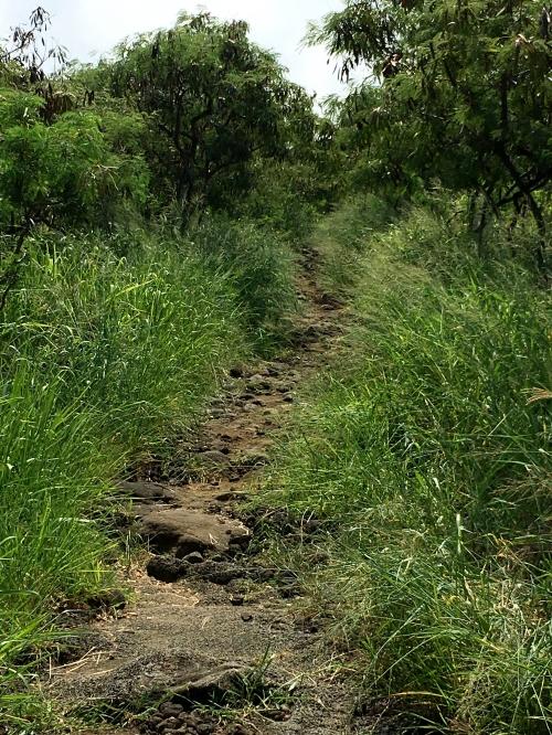 Kealakekua Bay Trail grassy part of the trail