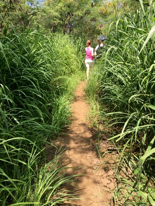 Kealakekua Bay Trail Patti walking in the tall grass