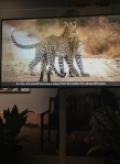 photo-video-of-leopard-and-cub