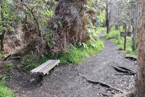 hawaii-kilauea-iki-trail-volcanos-national-park-bench-and-trail
